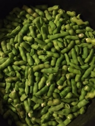 Beans II